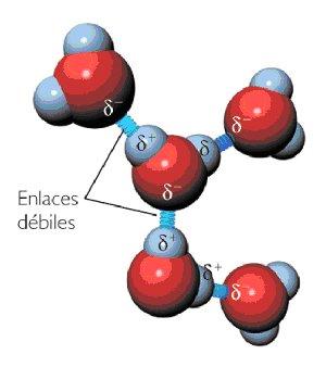 enlace por puente de hidrogeno